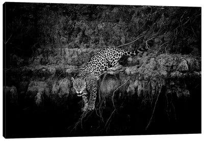 Jaguar On Cliff Canvas Art Print