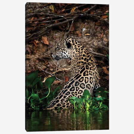 Jaguar 3-Piece Canvas #DWH35} by David Whelan Canvas Print