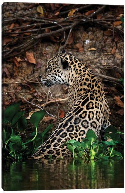 Jaguar Canvas Art Print