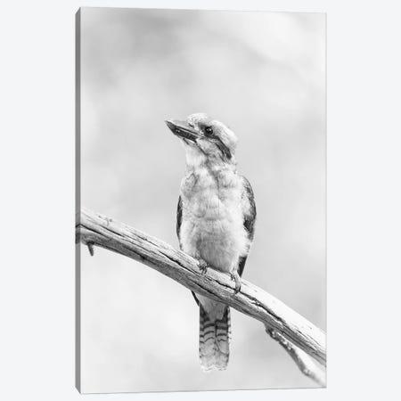 Kookaburra Canvas Print #DWH37} by David Whelan Canvas Art Print