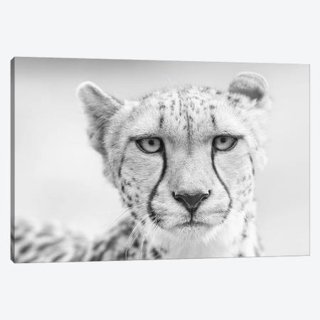 Kulinda  Canvas Print #DWH39} by David Whelan Canvas Artwork