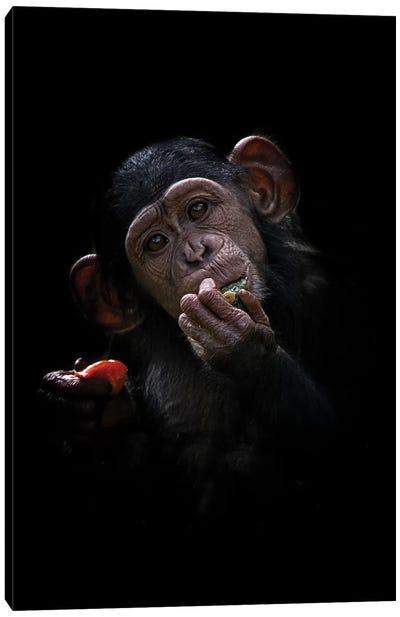 Baby Chimpanzee Canvas Art Print