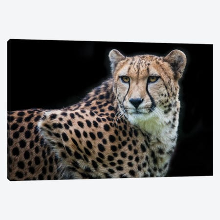 Kulinda in Color Canvas Print #DWH41} by David Whelan Art Print