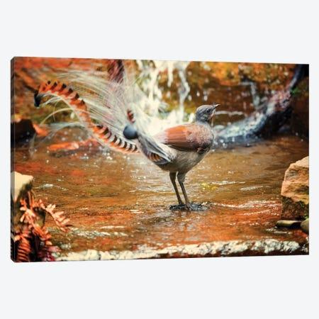 Lyrebird Canvas Print #DWH44} by David Whelan Canvas Wall Art