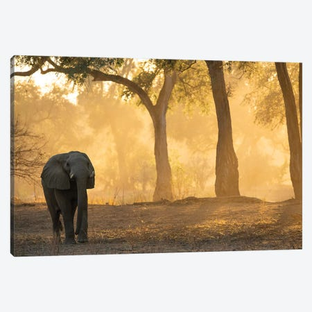 Mana Pools Elephant Canvas Print #DWH45} by David Whelan Canvas Artwork