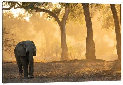 Mana Pools Elephant Canvas Art Print