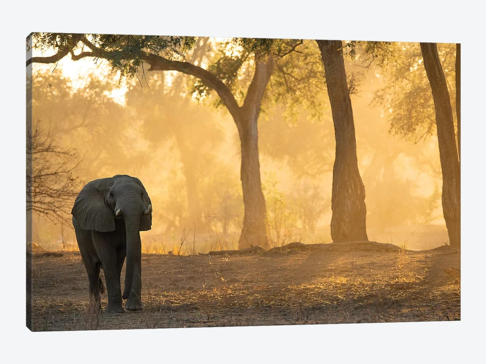 Mana Pools Elephant 1-piece Canvas Print