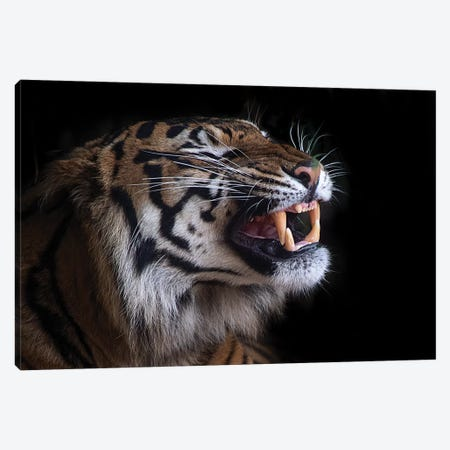 Nice Teeth Canvas Print #DWH56} by David Whelan Art Print