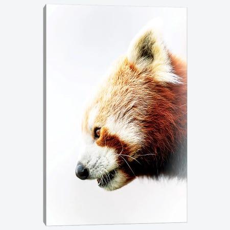 Red Panda 3-Piece Canvas #DWH59} by David Whelan Canvas Art