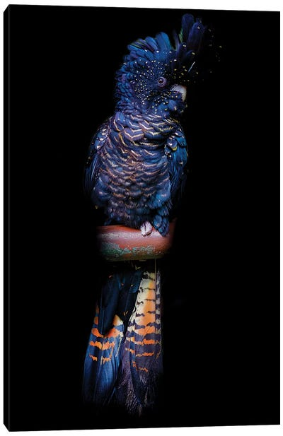 Red-Tailed Black Cockatoo Canvas Art Print