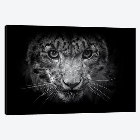 Snow Leopard In Black And White Canvas Print #DWH67} by David Whelan Canvas Art