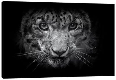Snow Leopard In Black And White Canvas Art Print