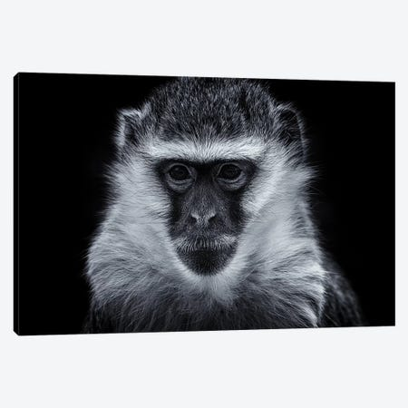 Vervet Monkey Canvas Print #DWH79} by David Whelan Canvas Art