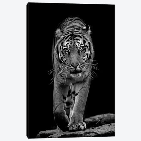 Whiskers In Black And White Canvas Print #DWH82} by David Whelan Art Print