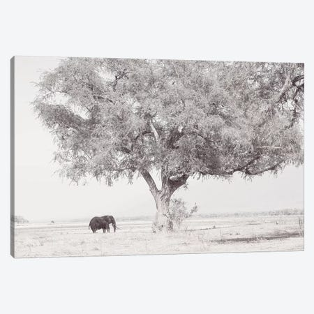 Zambezi Elephant Canvas Print #DWH87} by David Whelan Canvas Wall Art