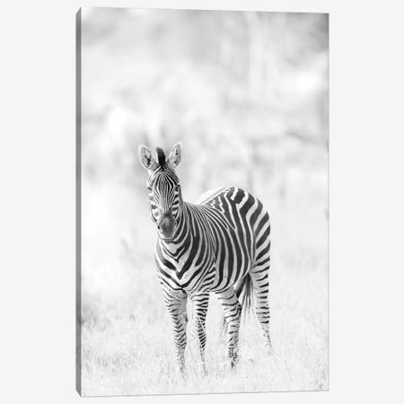 Zebra Canvas Print #DWH88} by David Whelan Canvas Art Print