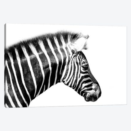 Zebra Close Up Canvas Print #DWH89} by David Whelan Canvas Print
