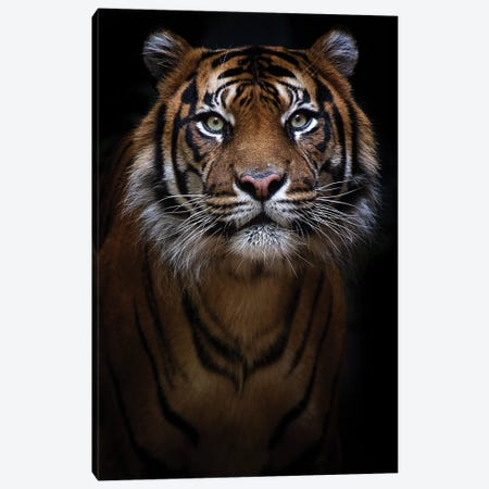 Sumatran Tiger Portrait Canvas Print #DWH93} by David Whelan Canvas Artwork