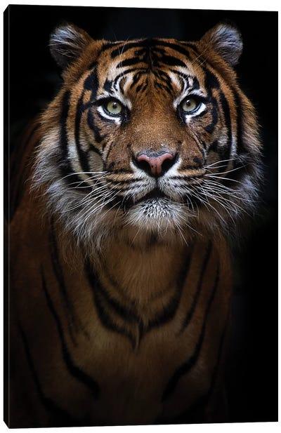 Sumatran Tiger Portrait Canvas Art Print