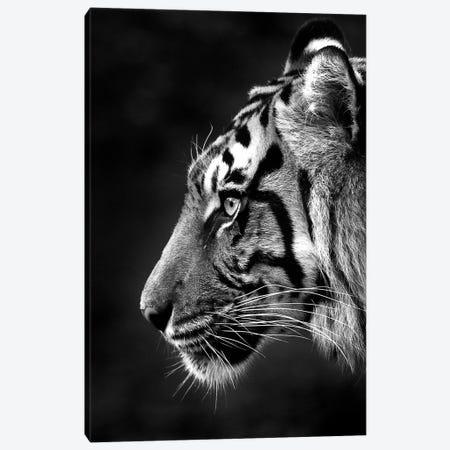 Indrah Canvas Print #DWH94} by David Whelan Canvas Print