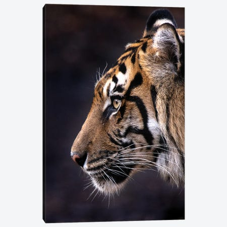 Indrah (Color) Canvas Print #DWH95} by David Whelan Art Print
