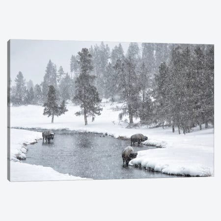 USA, Nez Perce River, Yellowstone National Park, Wyoming. Bison in a snowstorm along the Nez Perce. 3-Piece Canvas #DWI7} by Deborah Winchester Art Print