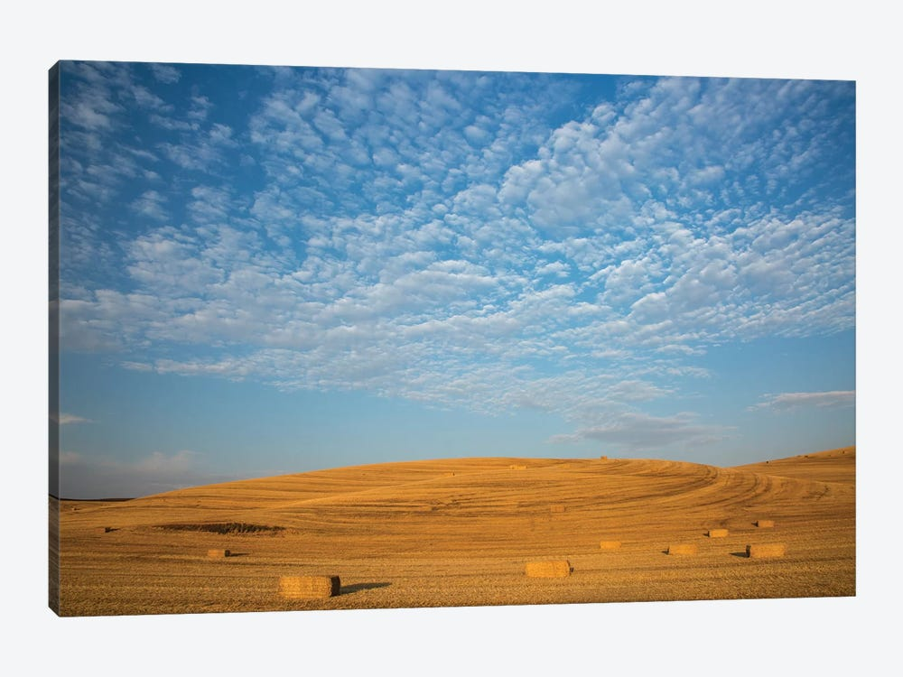 USA, Washington State, Palouse. Bales of straw in field. by Deborah Winchester 1-piece Canvas Wall Art