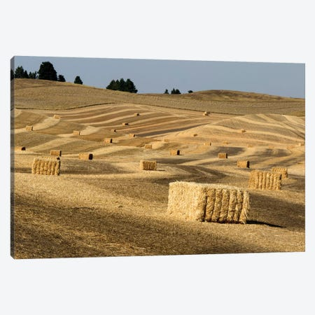USA, Washington State, Palouse. Bales of straw in field. Canvas Print #DWI9} by Deborah Winchester Canvas Wall Art