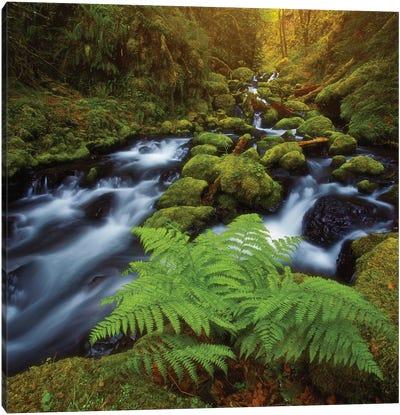 Gorton Creek Fern Canvas Art Print