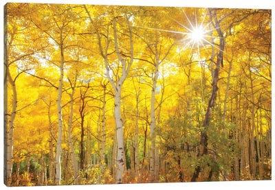 Aspen Morning Canvas Art Print