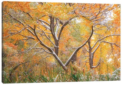 Autumn Love Canvas Art Print