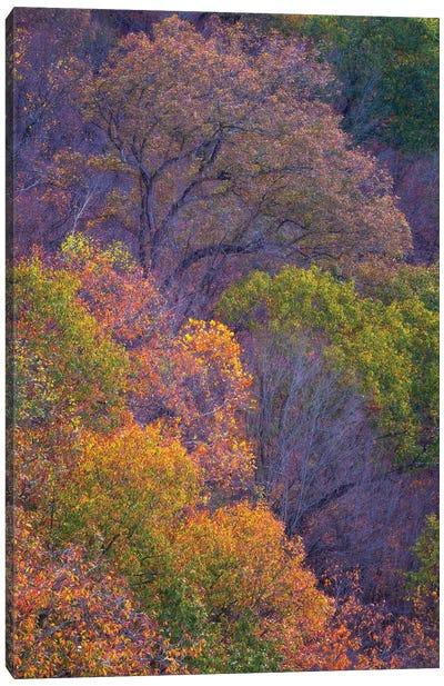 Autumn Palette Canvas Art Print