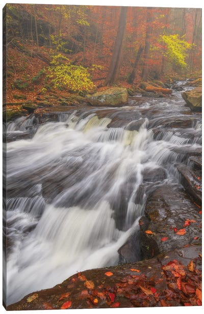 Autumn Slide Canvas Art Print