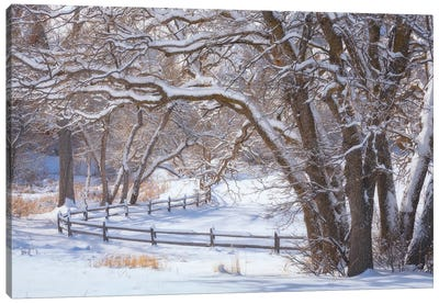 Rox Snow Canvas Art Print
