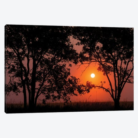 Sunrise Through the Trees Canvas Print #DWP246} by Darren White Photography Canvas Print