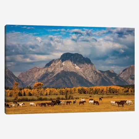 Teton Horse Ranch Canvas Print #DWP259} by Darren White Photography Canvas Art Print