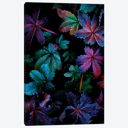 Frosty Fall Canvas Print #DWP2} by Darren White Photography Canvas Artwork
