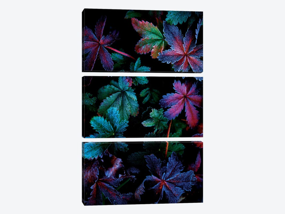 Frosty Fall by Darren White Photography 3-piece Canvas Print