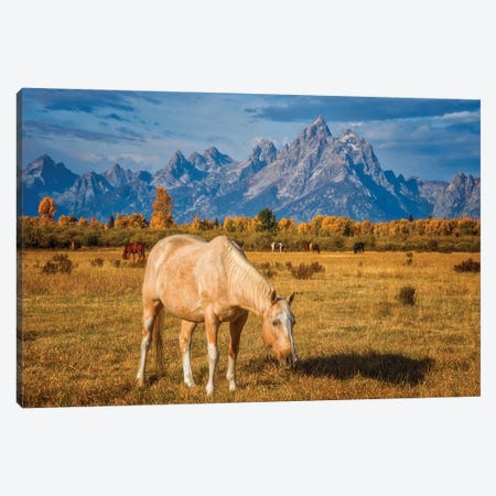 Breakfast in the Tetons Canvas Print #DWP38} by Darren White Photography Canvas Wall Art