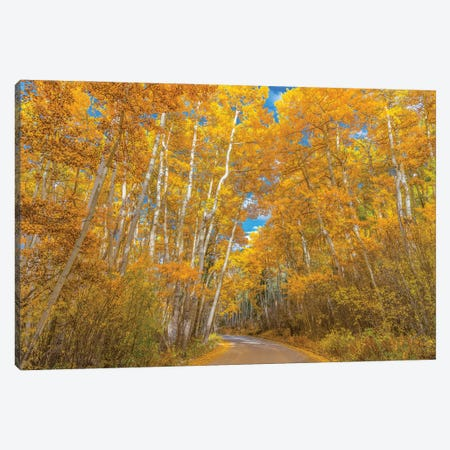 Colors of Fall Canvas Print #DWP58} by Darren White Photography Canvas Artwork