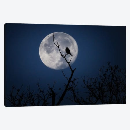 Crowing at the Moon Canvas Print #DWP62} by Darren White Photography Canvas Print