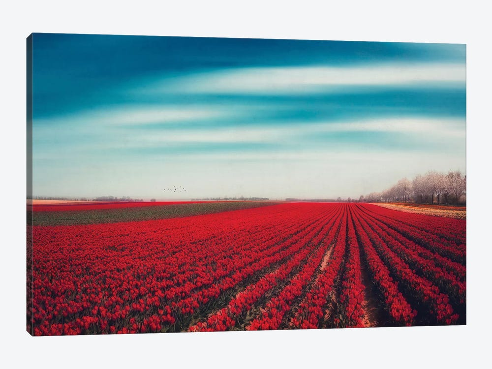 Tulips by Dirk Wuestenhagen 1-piece Canvas Artwork