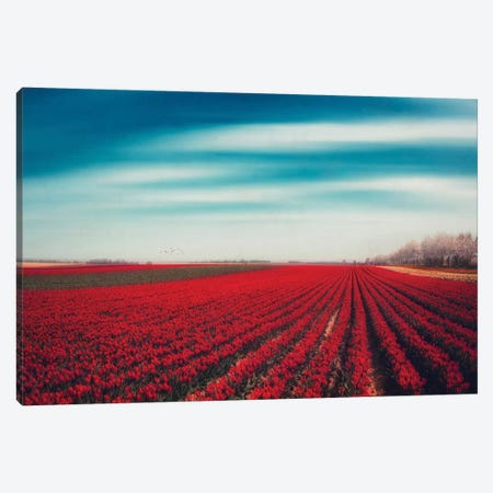 Tulips Canvas Print #DWU8} by Dirk Wuestenhagen Canvas Art Print