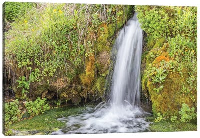 USA, Wyoming, Sublette County. Kendall Warm Springs, a small waterfall flowing over a mossy ledge. Canvas Art Print