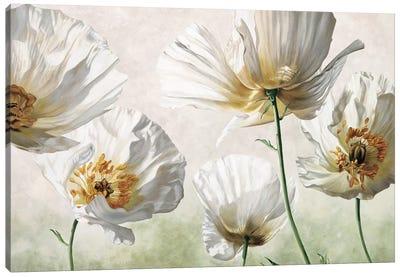 Raggi di sole Canvas Art Print