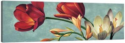 Luce e colore I Canvas Art Print
