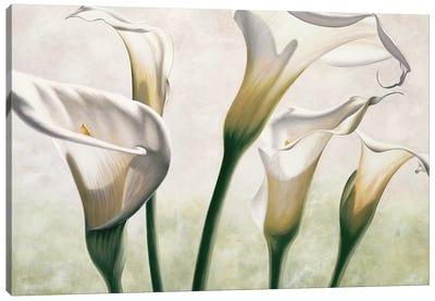 Luce Canvas Art Print