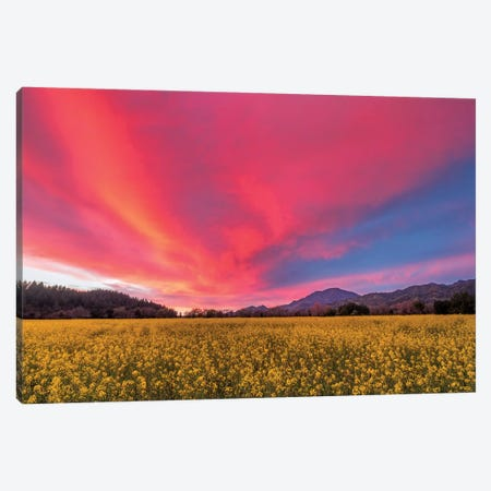 Spring Sunset, Napa Valley Canvas Print #ECA2} by Elizabeth Carmel Canvas Art Print