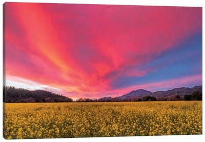 Spring Sunset, Napa Valley Canvas Art Print