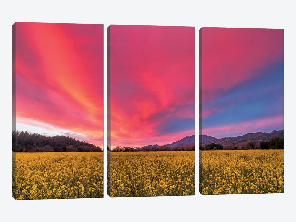Spring Sunset, Napa Valley by Elizabeth Carmel 3-piece Canvas Art